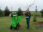 Измельчение веток деревьев в Гомеле