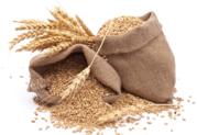 Зерно (ищем покупателей Гомельская обл) - Пшеница,  Ячмень,  Тритикале!