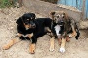 Шикарные щенки ищут дом