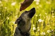 Небольшая собачка в добрые руки + подарок