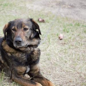 Собака в частный дом в дар