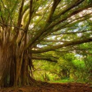 Вырубка деревьев очистка территории от зарослей Гомель,  область